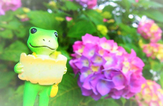 現象 蛙 男 化 戀愛中「蛙化現象」:當單戀得到回應,愛意為何消逝