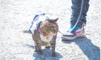 猫をリード無しや抱っこで散歩させても良い?気をつけること5つ
