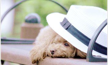 犬を旅行に連れて行くのはストレスにならない?必要な持ち物は?
