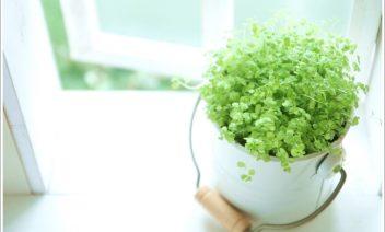 風水で恋愛運を上げる観葉植物の種類は?復縁にも効果あり!