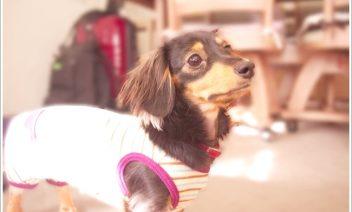 犬が服を嫌がる理由とは?噛む場合は無理に着せてはいけない?